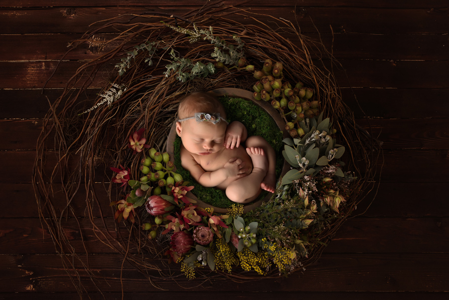 top newborn photographers in london ontario